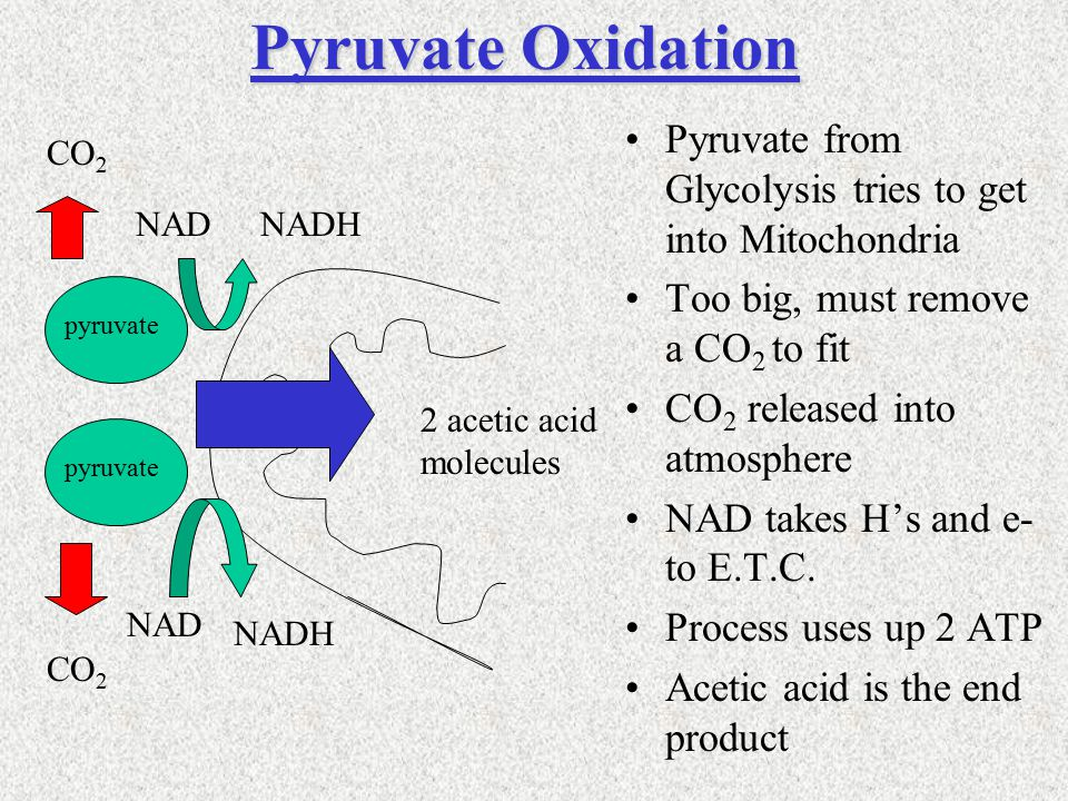 Pyruvate from Glycolysis tries to get into Mitochondria Too big, must remove a CO 2 to fit CO 2 released into atmosphere NAD takes H's and e- to E.T.C