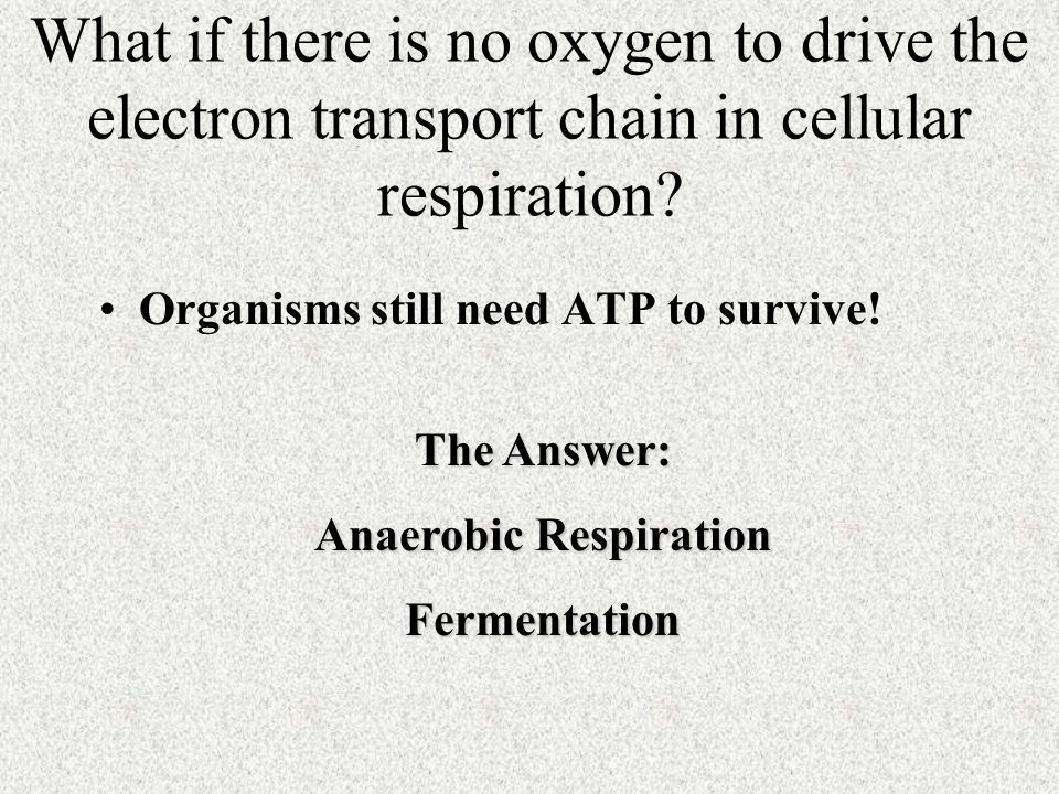 What if there is no oxygen to drive the electron transport chain in cellular respiration.