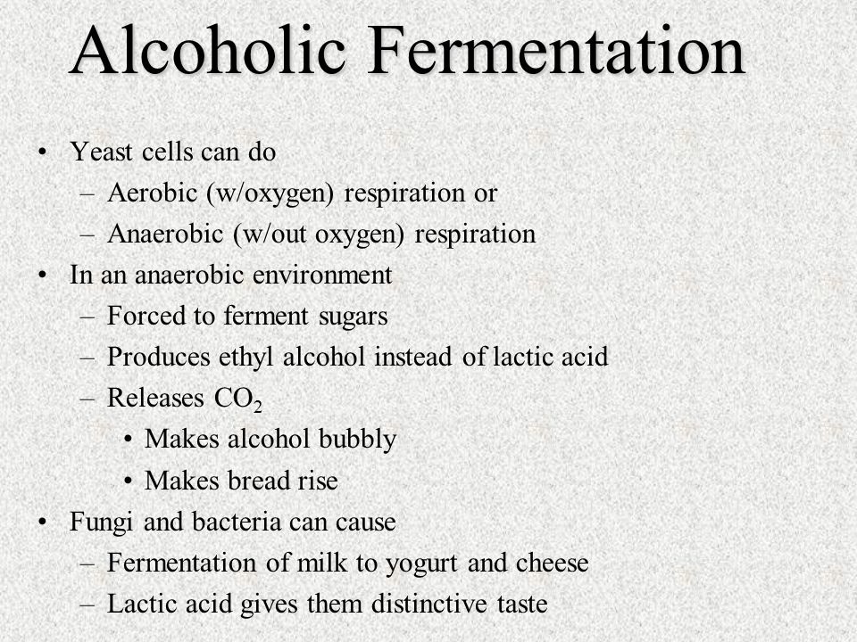Yeast cells can do –Aerobic (w/oxygen) respiration or –Anaerobic (w/out oxygen) respiration In an anaerobic environment –Forced to ferment sugars –Produces ethyl alcohol instead of lactic acid –Releases CO 2 Makes alcohol bubbly Makes bread rise Fungi and bacteria can cause –Fermentation of milk to yogurt and cheese –Lactic acid gives them distinctive taste Alcoholic Fermentation
