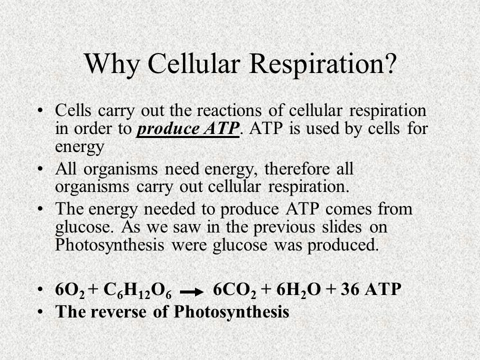 Why Cellular Respiration? Cells carry out the reactions of cellular respiration in order to produce ATP. ATP is used by cells for energy All organisms