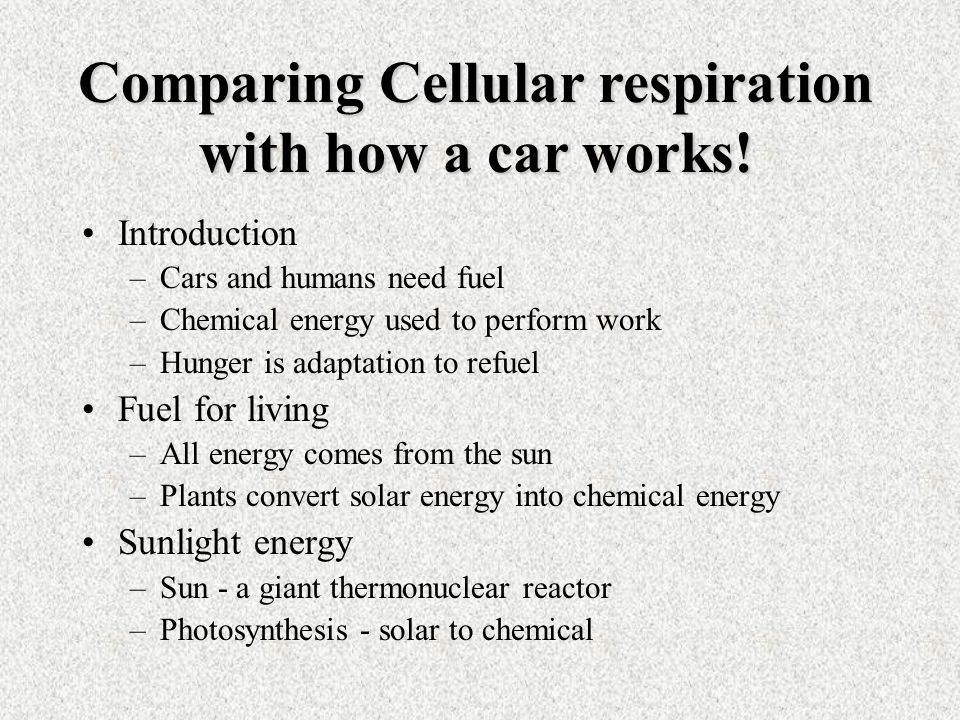 Introduction –Cars and humans need fuel –Chemical energy used to perform work –Hunger is adaptation to refuel Fuel for living –All energy comes from the sun –Plants convert solar energy into chemical energy Sunlight energy –Sun - a giant thermonuclear reactor –Photosynthesis - solar to chemical Comparing Cellular respiration with how a car works!