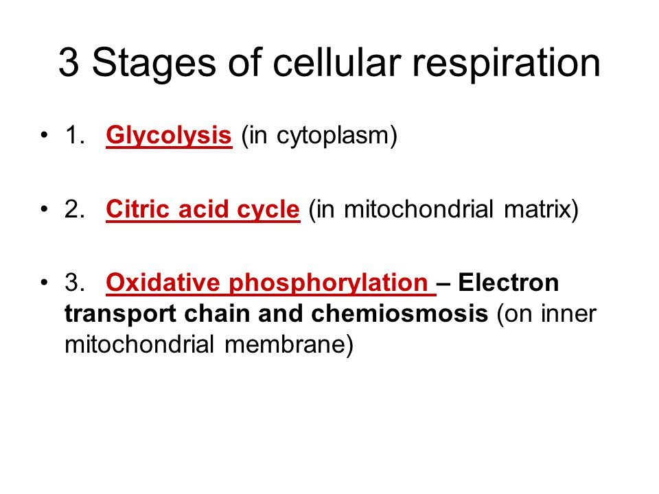 Cellular Respiration Overview http://fig.cox.miami.edu/~cmallery/150/metab/c9x6cell-respiration.jpg