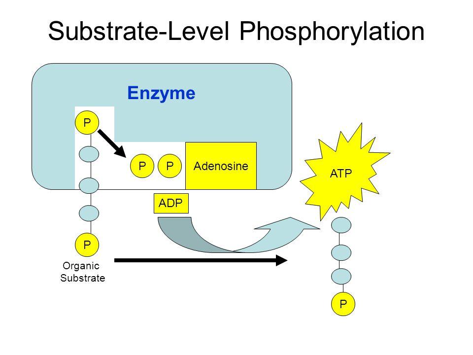 2ATP 2P 2ADP + 2 NAD+2 NADH 2 pyruvate Glucose 2H+ +