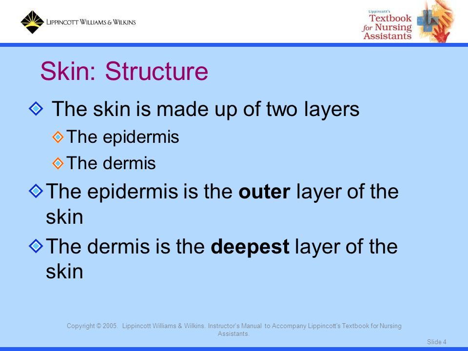 Slide 4 Copyright © 2005. Lippincott Williams & Wilkins. Instructor's Manual to Accompany Lippincott's Textbook for Nursing Assistants. The skin is ma