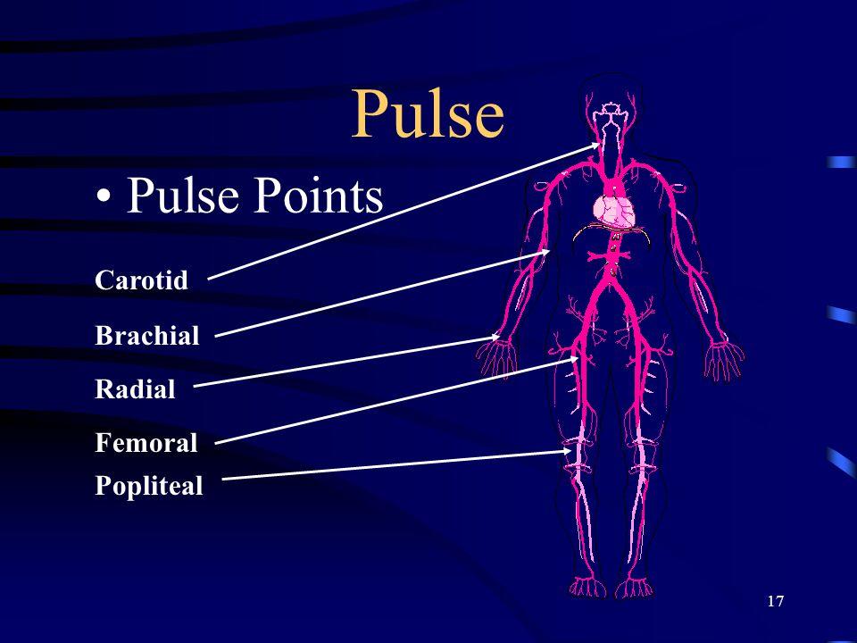 17 Pulse Pulse Points Carotid Brachial Radial Femoral Popliteal