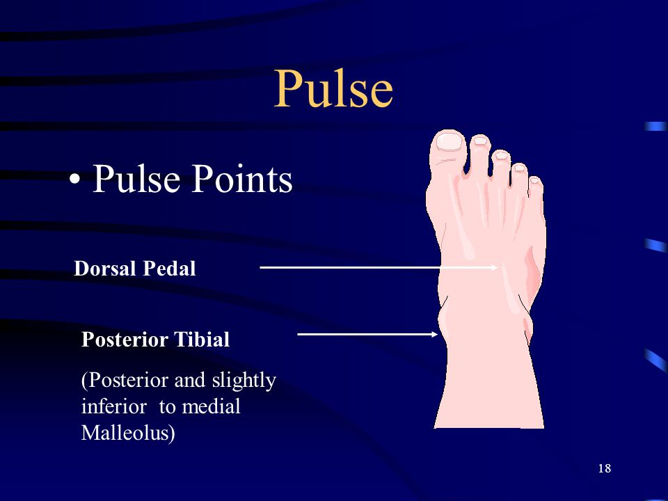 18 Pulse Pulse Points Dorsal Pedal Posterior Tibial (Posterior and slightly inferior to medial Malleolus)