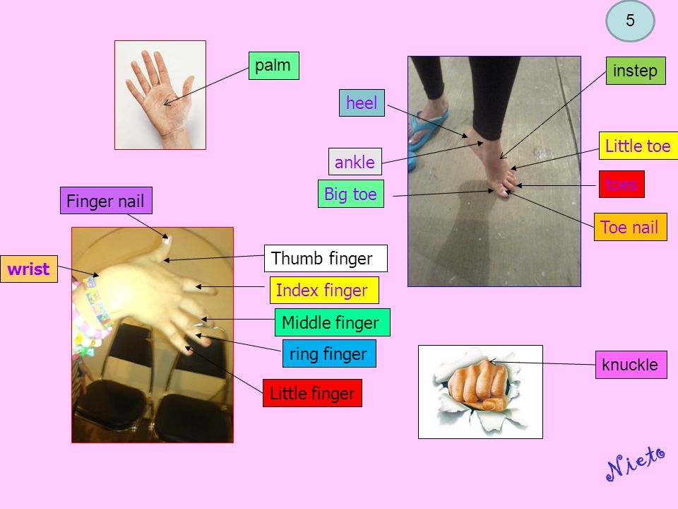 Thumb finger Middle finger Index finger ring finger Little finger wrist Finger nail heel ankle Big toe Toe nail toes Little toe palm knuckle instep Nieto 5