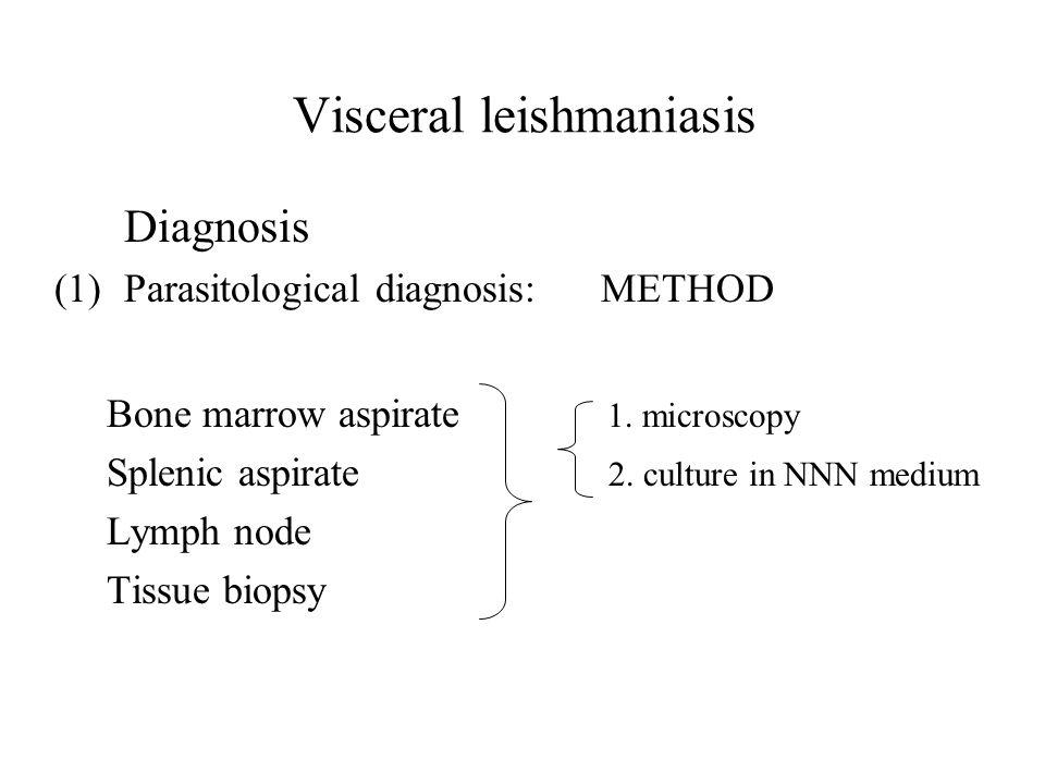Visceral leishmaniasis Diagnosis (1)Parasitological diagnosis: METHOD Bone marrow aspirate 1. microscopy Splenic aspirate 2. culture in NNN medium Lym