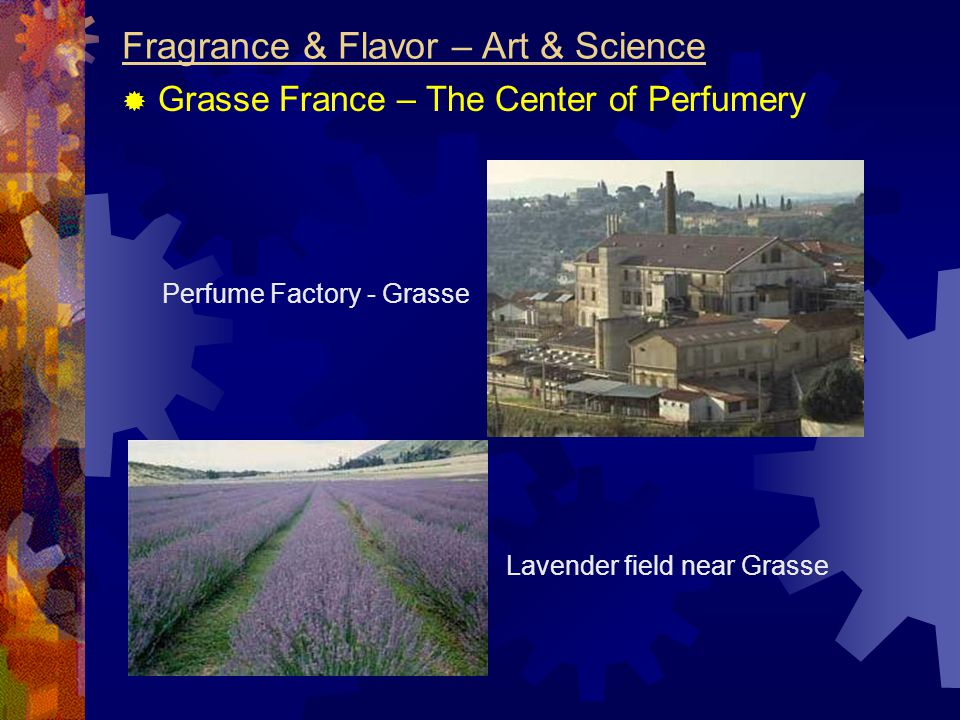 Fragrance & Flavor – Art & Science  Grasse France – The Center of Perfumery Perfume Factory - Grasse Lavender field near Grasse