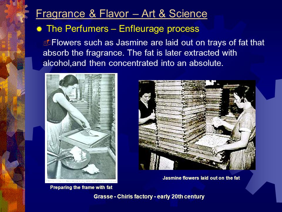 Fragrance & Flavor – Art & Science  The Perfumers – Enfleurage process  Flowers such as Jasmine are laid out on trays of fat that absorb the fragrance.