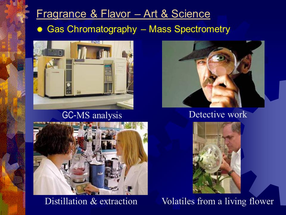 Fragrance & Flavor – Art & Science  Gas Chromatography – Mass Spectrometry GC- MS analysis Detective work Distillation & extractionVolatiles from a l