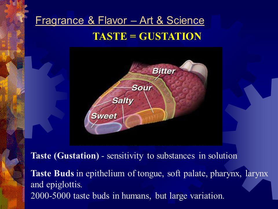 Fragrance & Flavor – Art & Science Taste Buds in epithelium of tongue, soft palate, pharynx, larynx and epiglottis. 2000-5000 taste buds in humans, bu