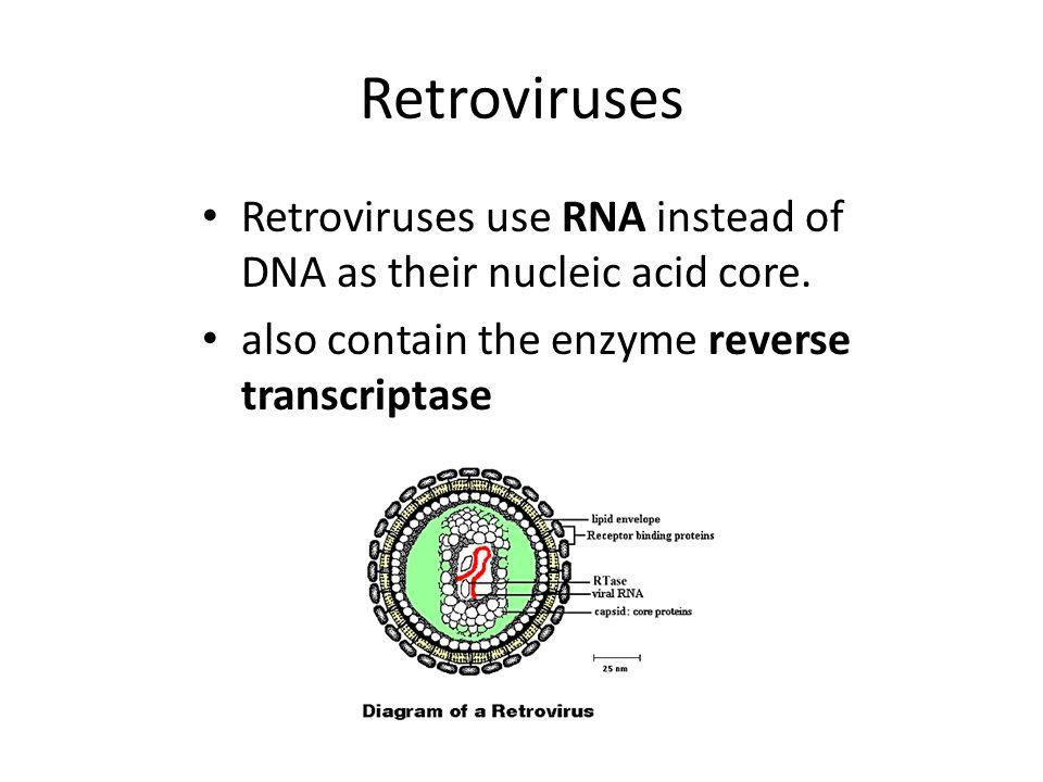 Retrovirus Examples HIV Rous sarcoma (first one discovered) Leukemia viruses