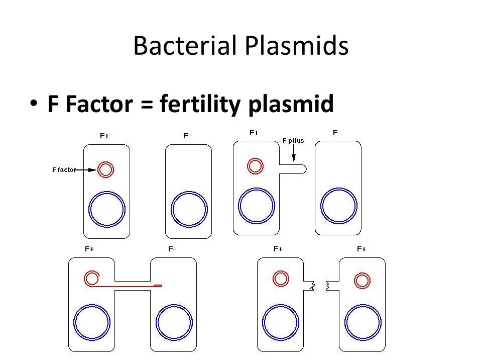 F Plasmid Resistance Plasmid Carry genes to destroy antibiotics