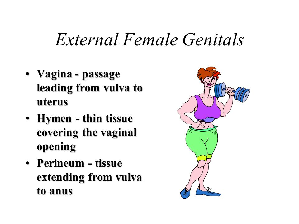 External Female Genitals Vagina - passage leading from vulva to uterusVagina - passage leading from vulva to uterus Hymen - thin tissue covering the vaginal openingHymen - thin tissue covering the vaginal opening Perineum - tissue extending from vulva to anusPerineum - tissue extending from vulva to anus