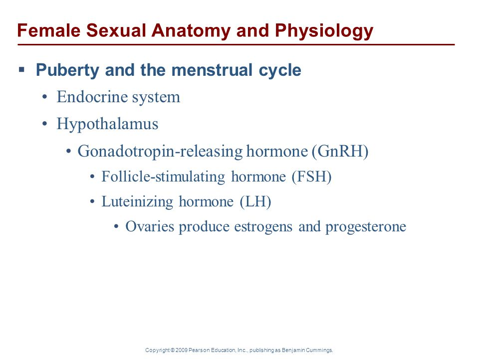 Copyright © 2009 Pearson Education, Inc., publishing as Benjamin Cummings. Female Sexual Anatomy and Physiology  Puberty and the menstrual cycle Endo