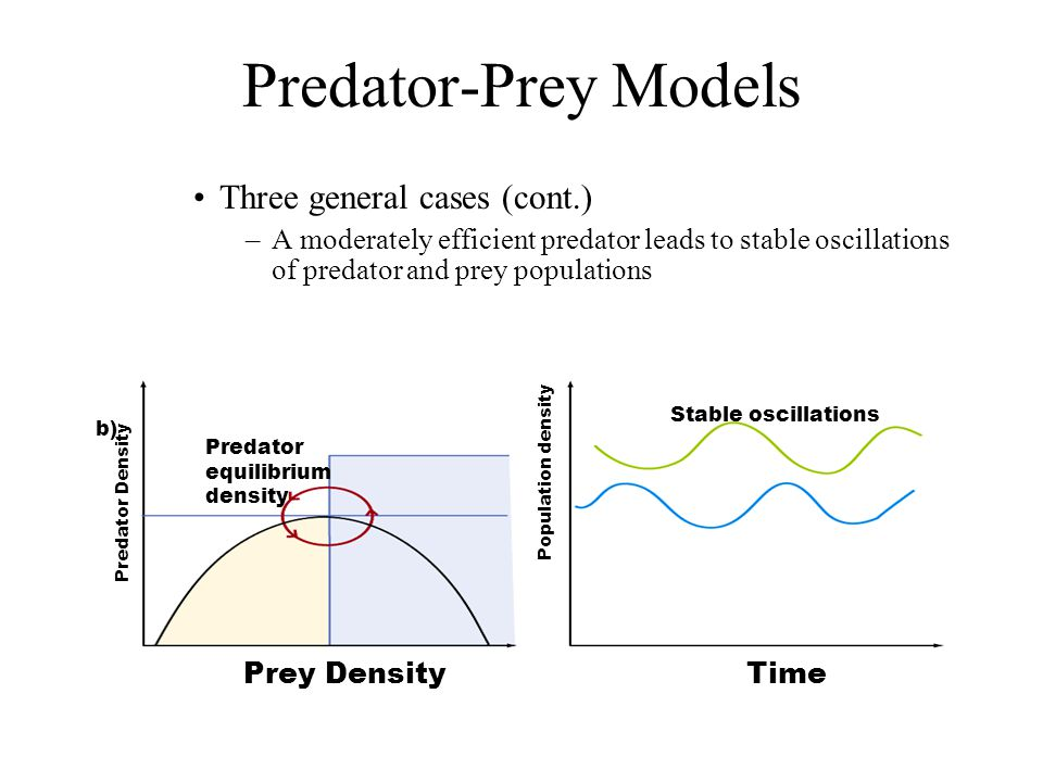 Predator-Prey Models Three general cases (cont.) –A moderately efficient predator leads to stable oscillations of predator and prey populations Stable