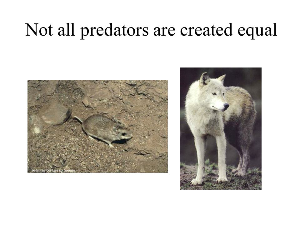 Not all predators are created equal