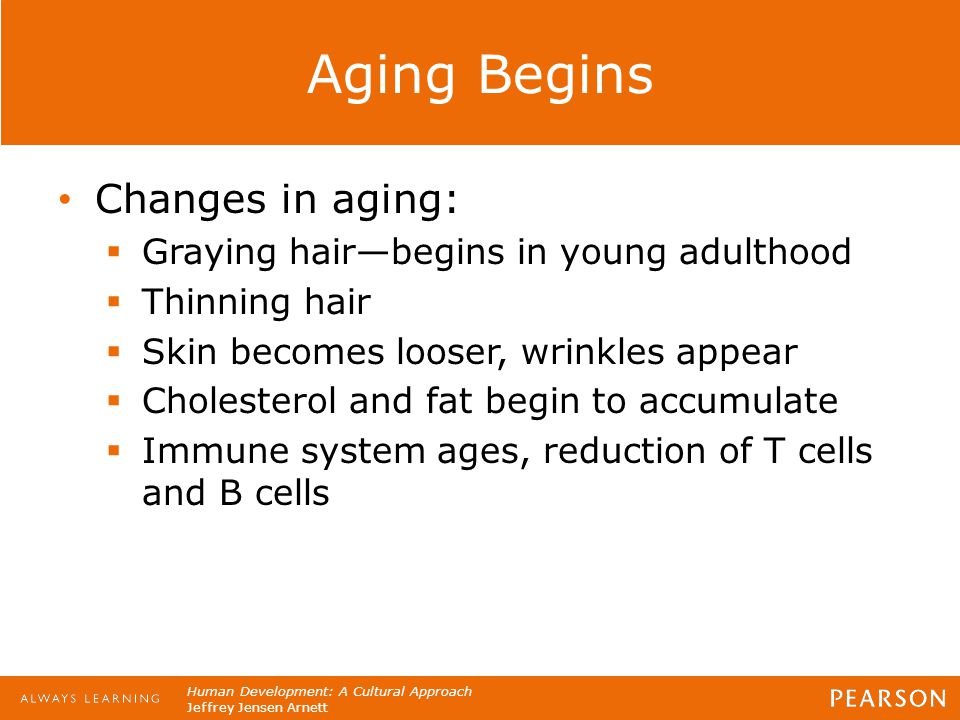 Human Development: A Cultural Approach Jeffrey Jensen Arnett Aging Begins Changes in aging:  Graying hair—begins in young adulthood  Thinning hair 