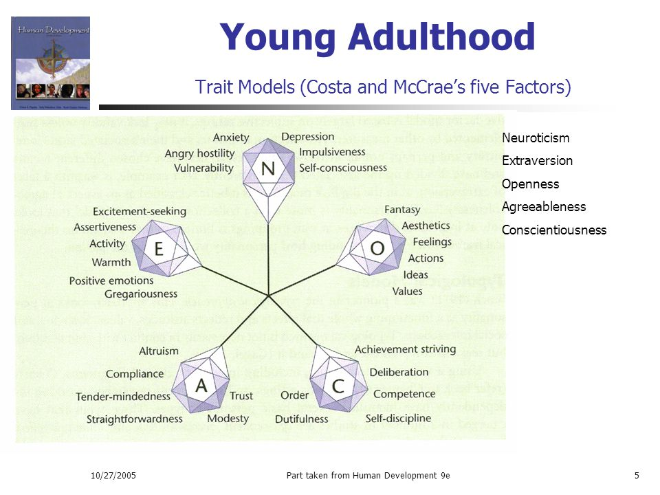 10/27/2005Part taken from Human Development 9e5 Young Adulthood Trait Models (Costa and McCrae's five Factors) Neuroticism Extraversion Openness Agree
