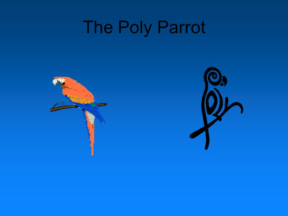 The Poly Parrot