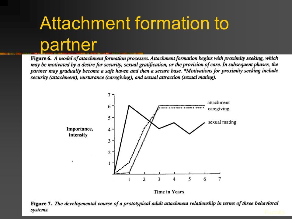 Attachment formation to partner Fuccillo