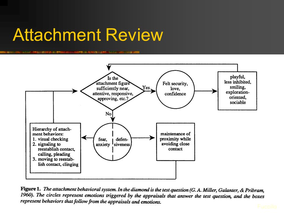 Attachment Review Fuccillo