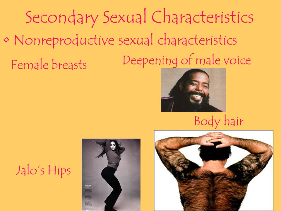 Primary Sexual Characteristics The body structures that make sexual reproduction possible Ovaries Testicles