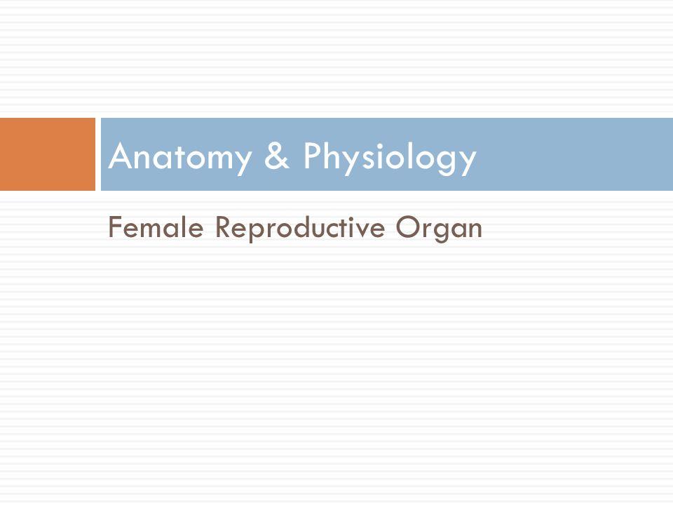 Anatomy & Physiology Female Reproductive Organ