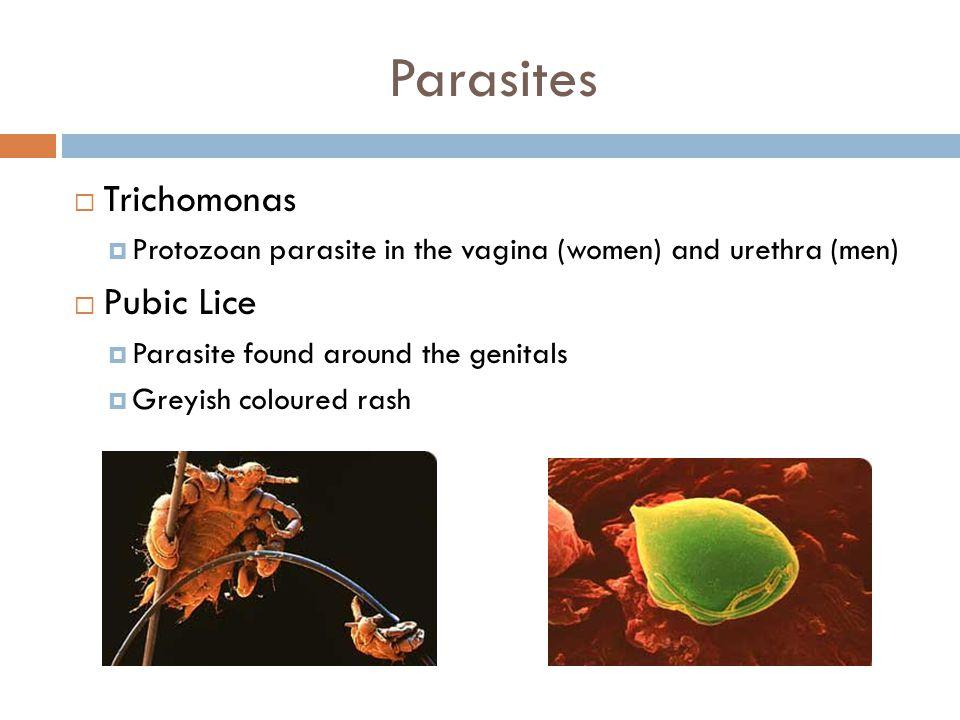 Parasites  Trichomonas  Protozoan parasite in the vagina (women) and urethra (men)  Pubic Lice  Parasite found around the genitals  Greyish coloured rash