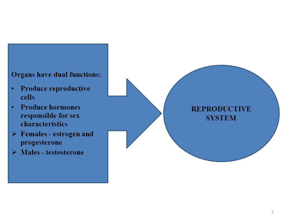 2 Organs have dual functions: Produce reproductive cells Produce hormones responsible for sex characteristics  Females - estrogen and progesterone 