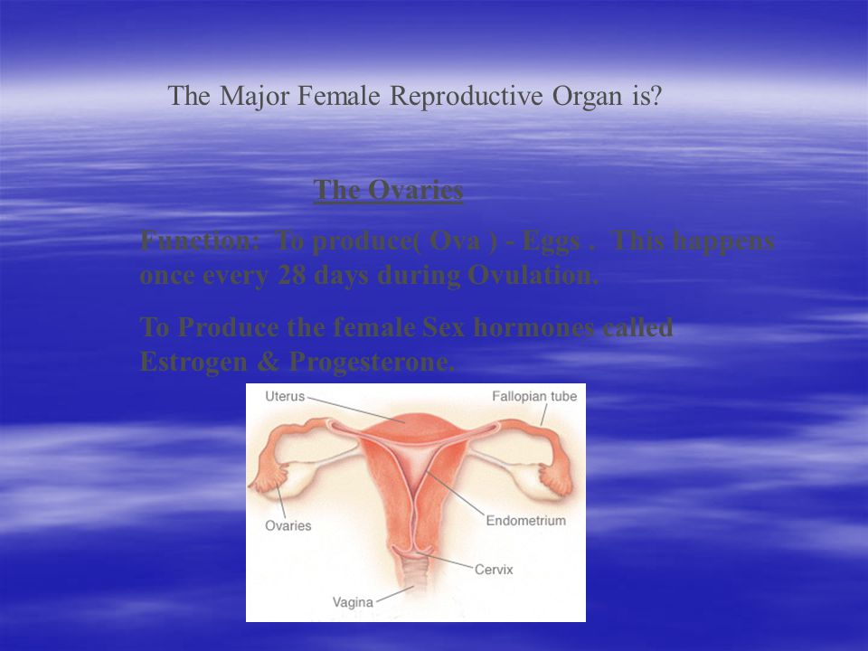 MALE: Testes, epididymis, vas deferens, urethra FEMALE: Ovaries, Fallopian Tubes, Uterus, Cervix, Vagina
