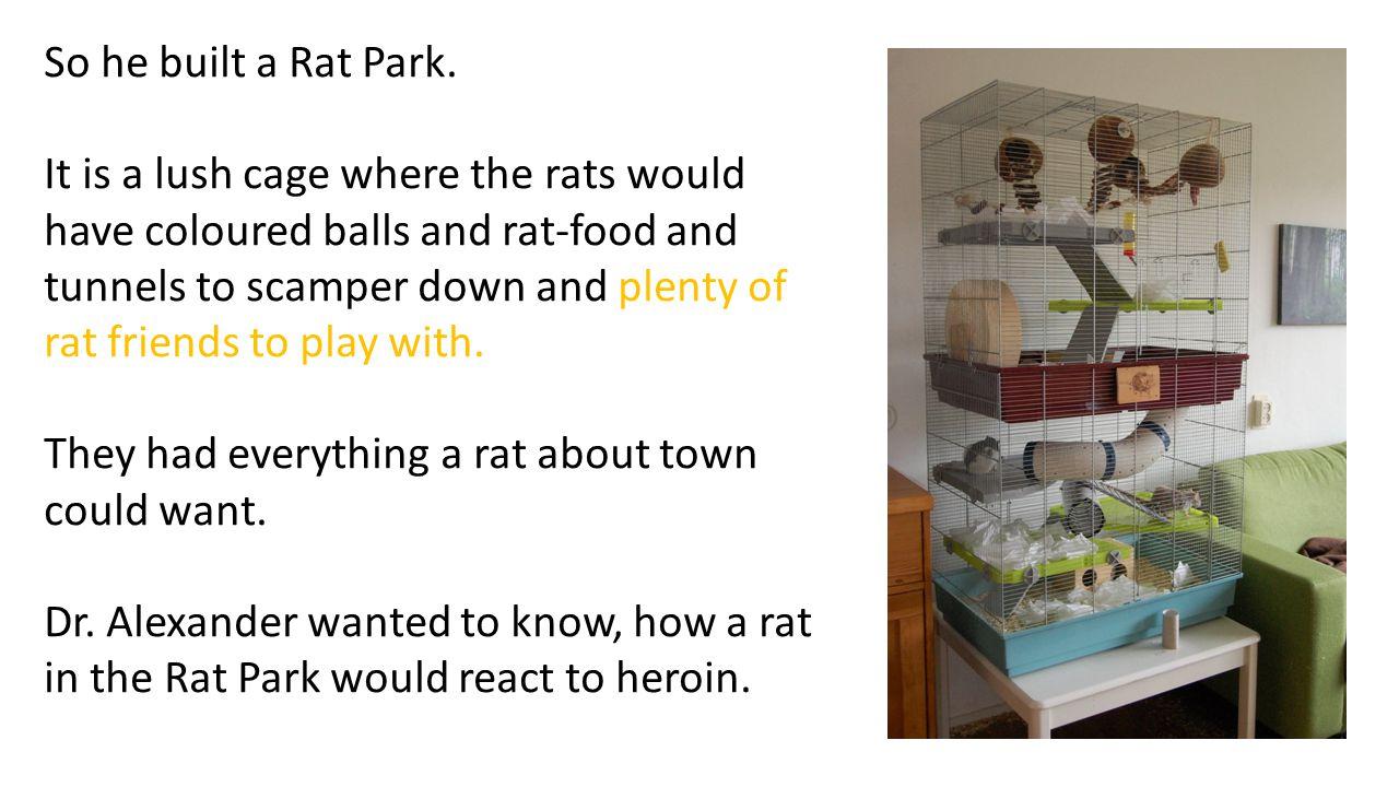 So he built a Rat Park.