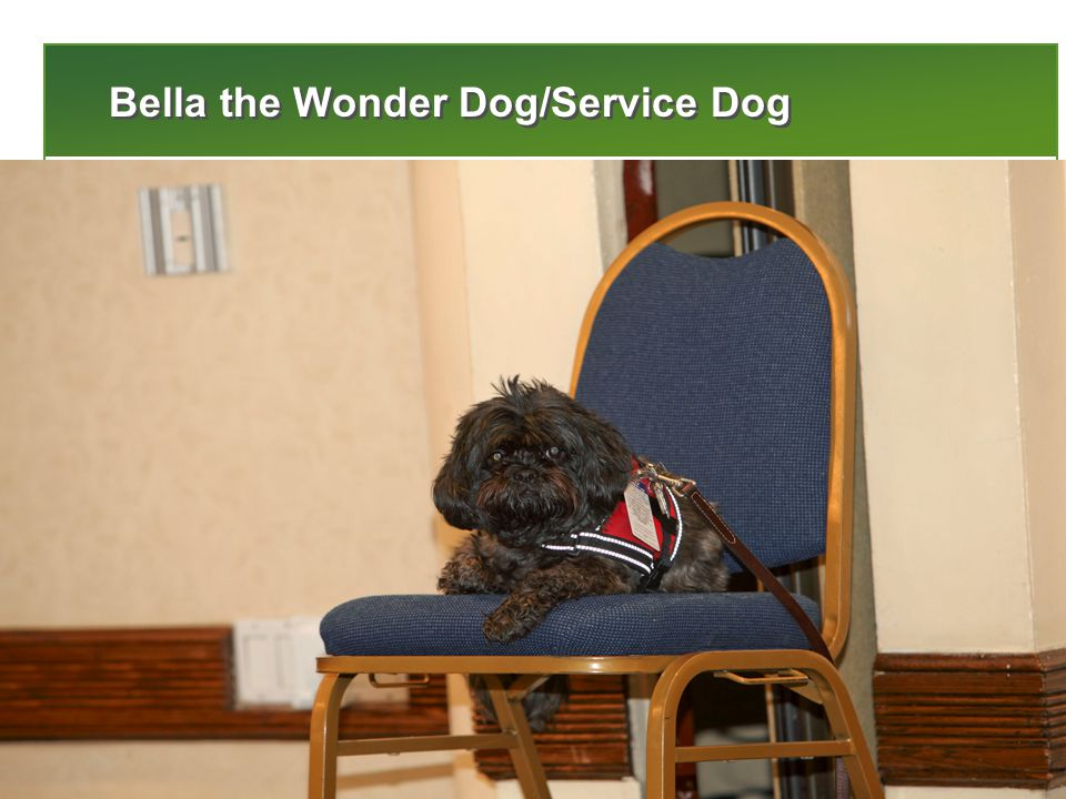 8 Bella the Wonder Dog/Service Dog