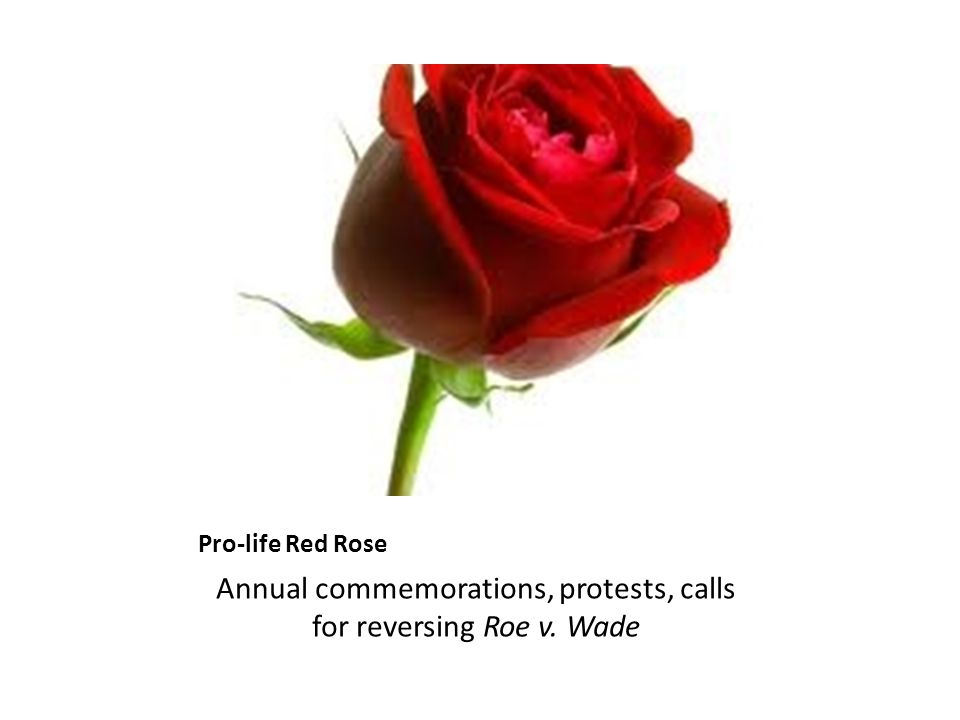 Pro-life Red Rose Annual commemorations, protests, calls for reversing Roe v. Wade