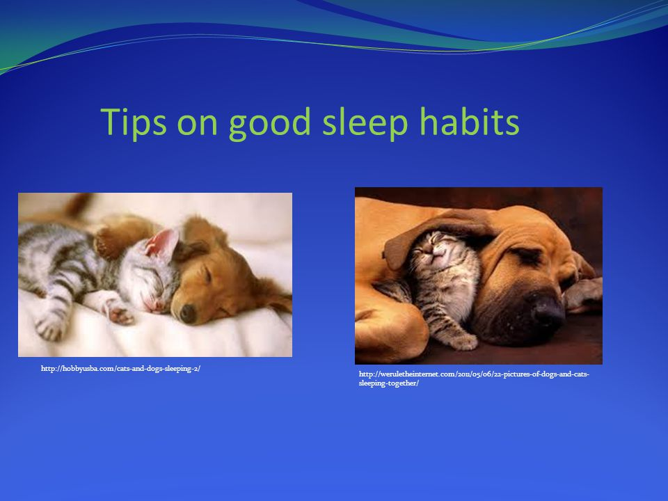 Tips on good sleep habits http://hobbyusba.com/cats-and-dogs-sleeping-2/ http://weruletheinternet.com/2011/05/06/22-pictures-of-dogs-and-cats- sleeping-together/