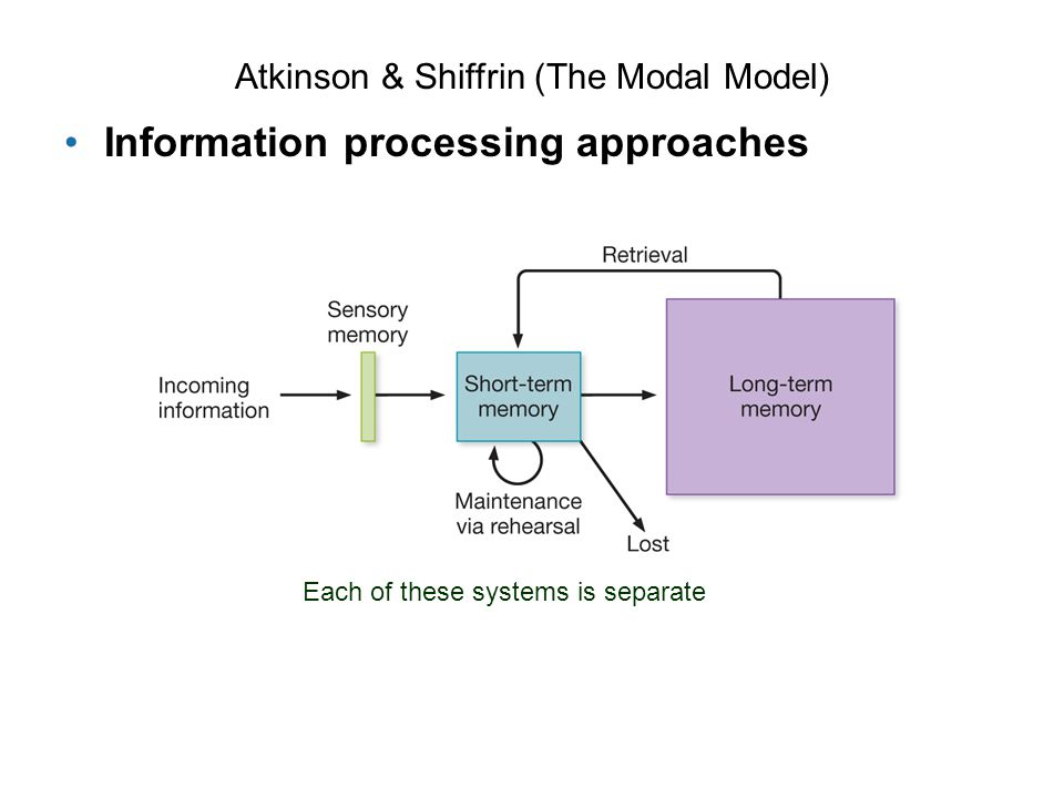 Atkinson & Shiffrin (The Modal Model) Information processing approaches Each of these systems is separate