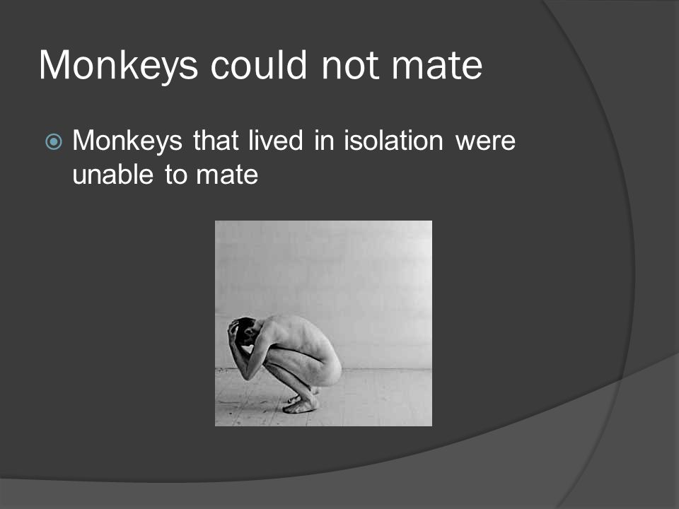 Monkeys could not mate  Monkeys that lived in isolation were unable to mate