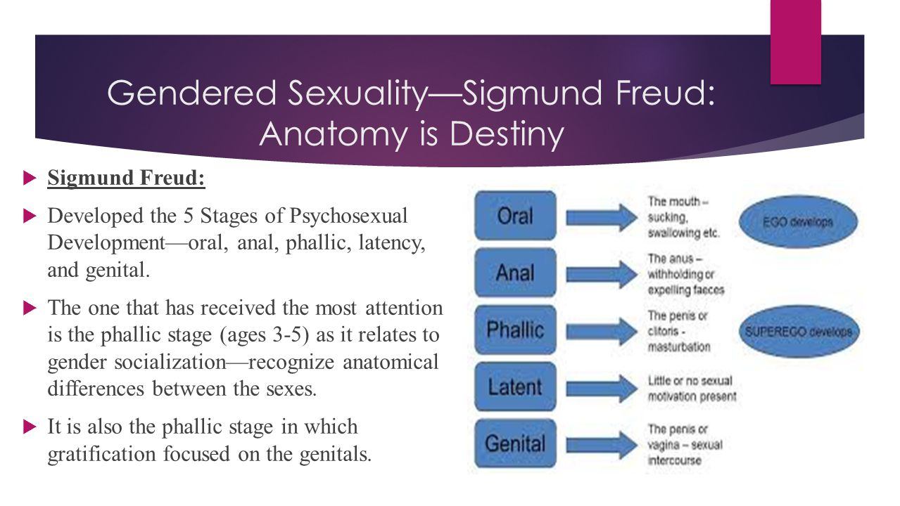  Sigmund Freud:  Developed the 5 Stages of Psychosexual Development—oral, anal, phallic, latency, and genital.  The one that has received the most