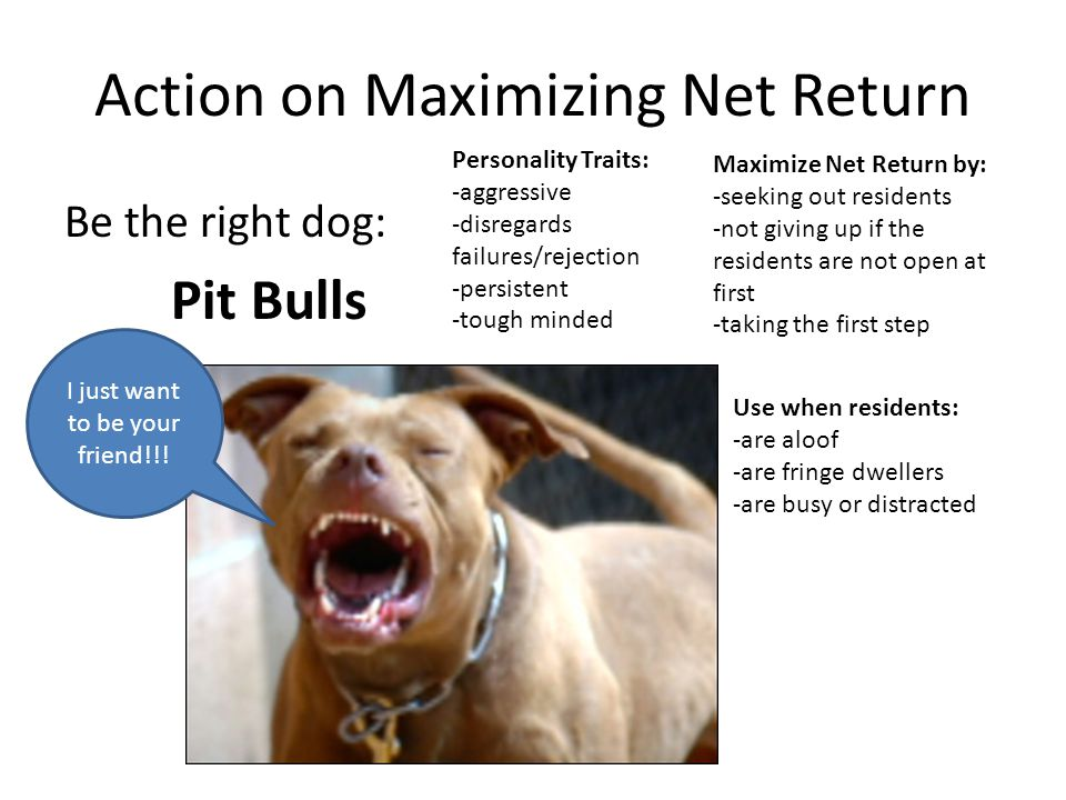 Action on Maximizing Net Return Be the right dog: Pit Bulls I just want to be your friend!!! Personality Traits: -aggressive -disregards failures/reje