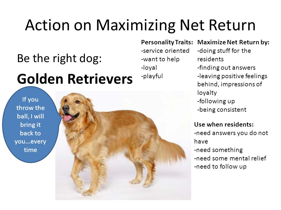 Action on Maximizing Net Return Be the right dog: Golden Retrievers Personality Traits: -service oriented -want to help -loyal -playful Maximize Net R
