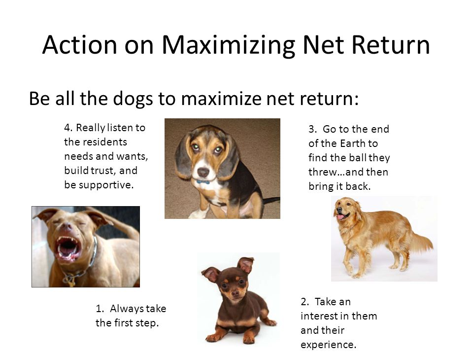 Action on Maximizing Net Return Be all the dogs to maximize net return: 1. Always take the first step. 2. Take an interest in them and their experienc