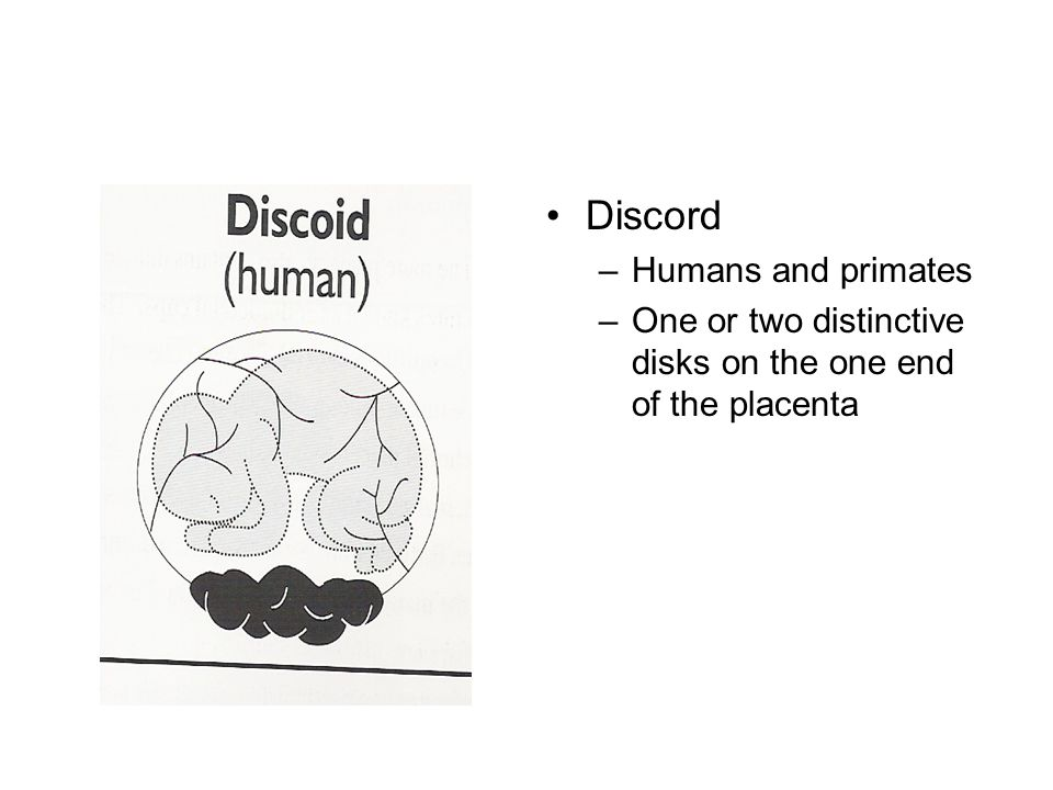 Discord –Humans and primates –One or two distinctive disks on the one end of the placenta