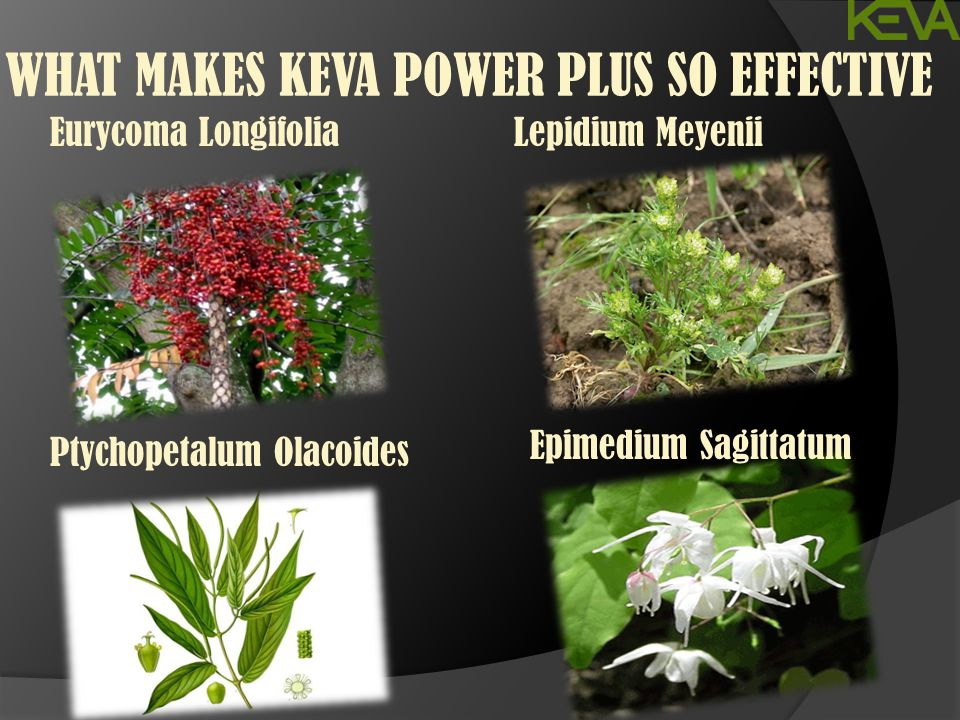 WHAT MAKES KEVA POWER PLUS SO EFFECTIVE Eurycoma Longifolia Ptychopetalum Olacoides Lepidium Meyenii Epimedium Sagittatum