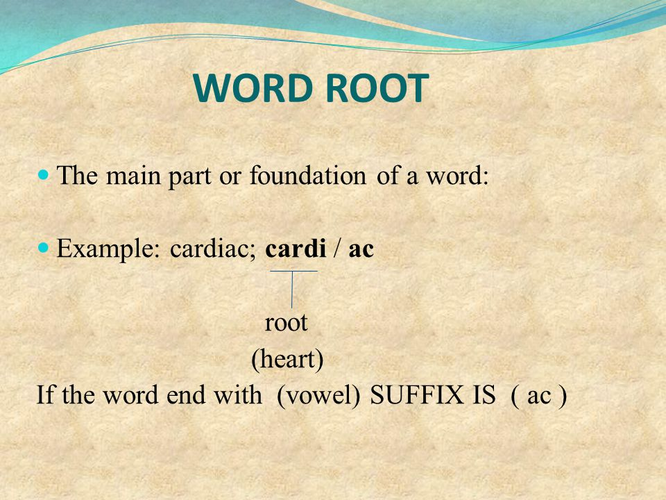 WORD ROOT The main part or foundation of a word: Example: cardiac; cardi / ac root (heart) If the word end with (vowel) SUFFIX IS ( ac )