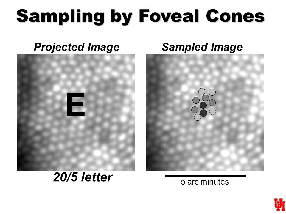 5 arc minutes 20/5 letter Projected Image Sampled Image Sampling by Foveal Cones