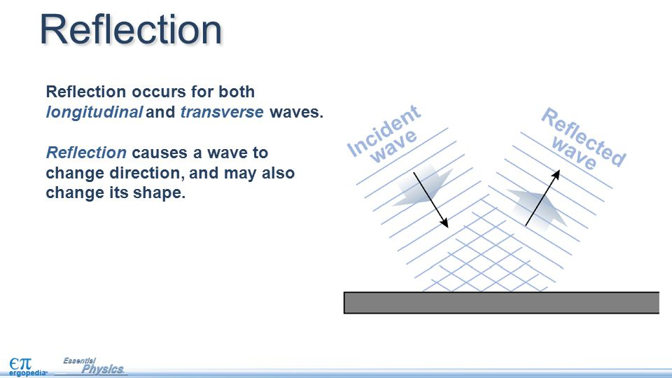 Reflection Reflection occurs for both longitudinal and transverse waves. Reflection causes a wave to change direction, and may also change its shape.