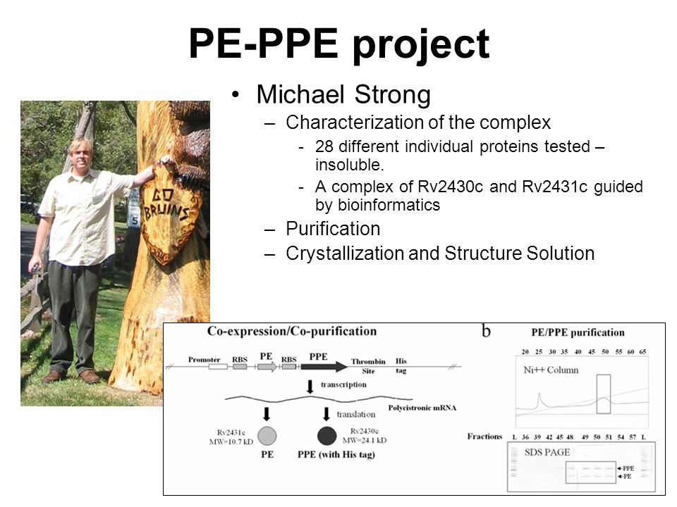 PE-PPE project Michael Strong –Characterization of the complex -28 different individual proteins tested – insoluble.