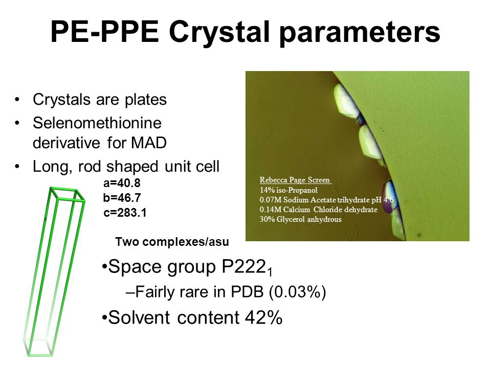 PE-PPE Crystal parameters Crystals are plates Selenomethionine derivative for MAD Long, rod shaped unit cell a=40.8 b=46.7 c=283.1 Two complexes/asu R
