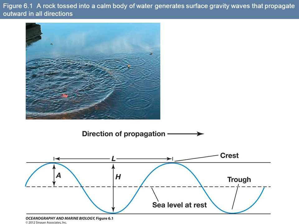 Figure 6.1 A rock tossed into a calm body of water generates surface gravity waves that propagate outward in all directions